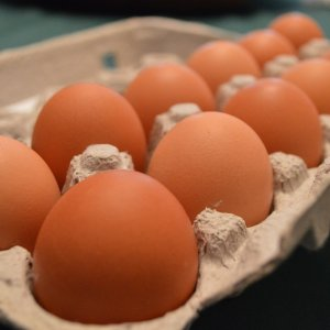 carton of 12 eggs